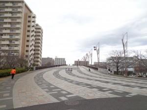 都立大島小松川公園(さくら