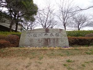 荒川千本桜①