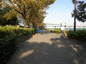 箱崎河岸緑道②