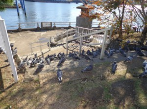 中の島公園④