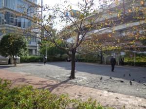 小網町児童遊園③