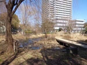 潮見さざなみ公園 自然観察広場②