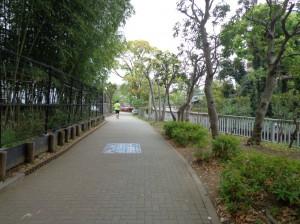 横十間川親水公園②