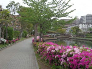横十間川親水公園③