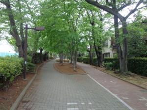 南砂緑道公園①
