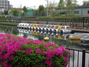 横十間川親水公園④