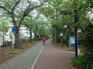 南砂緑道公園②