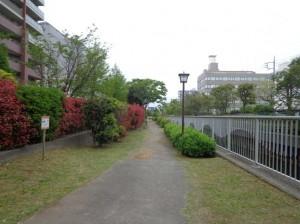 横十間川親水公園 西端