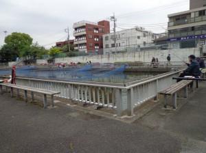 仙台堀川公園 釣堀