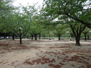 木場公園 バーベキュー広場①