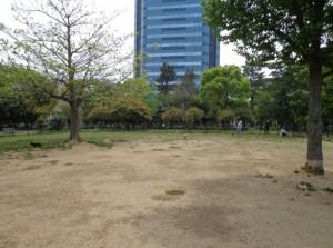 木場公園 ドッグラン