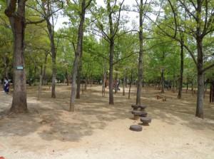 木場公園④